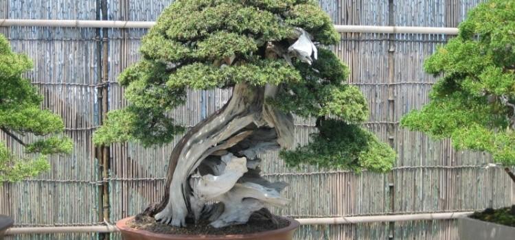 Kokufu no Tosho