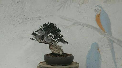 «Camaleón»