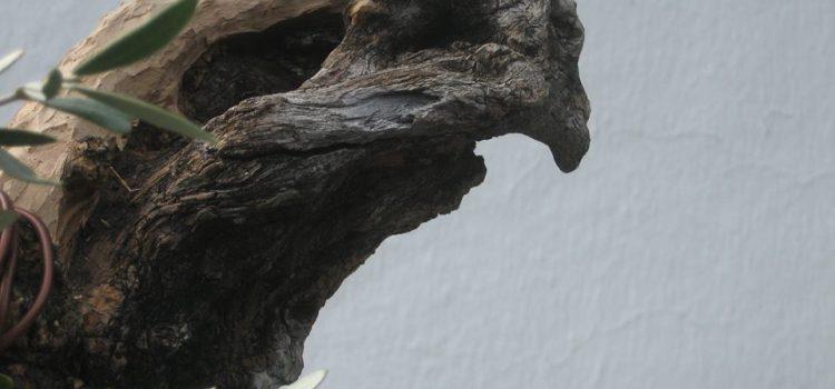 木製の か ワシ