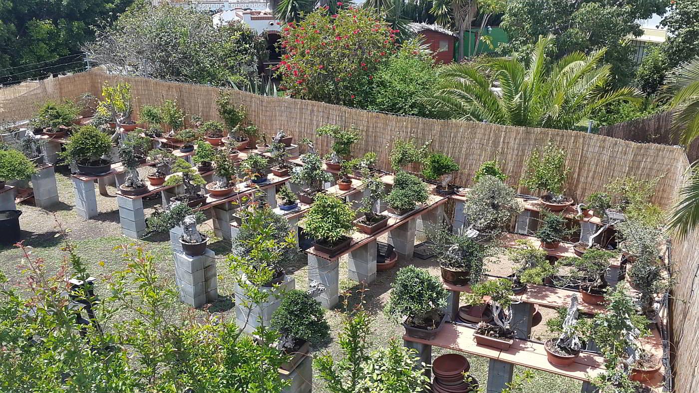 Un jardín con más de 100 bonsais en exposición y venta